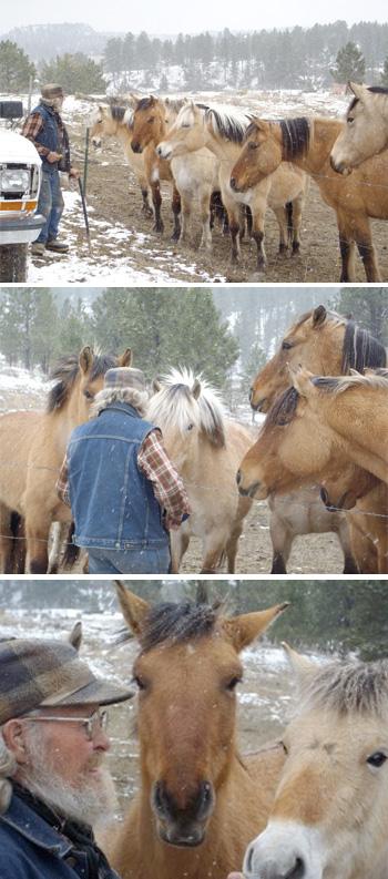HorseSponser