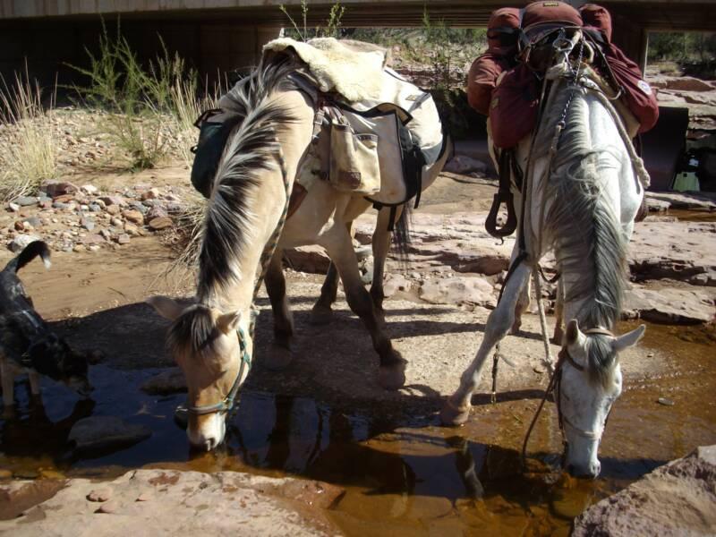 ride ladies ride hard burro